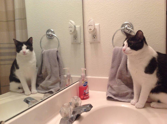 cat and mirror, funny cats, cat photos, cat pictures