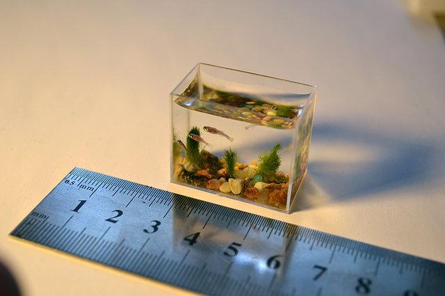 Keseimbangan Aquascape