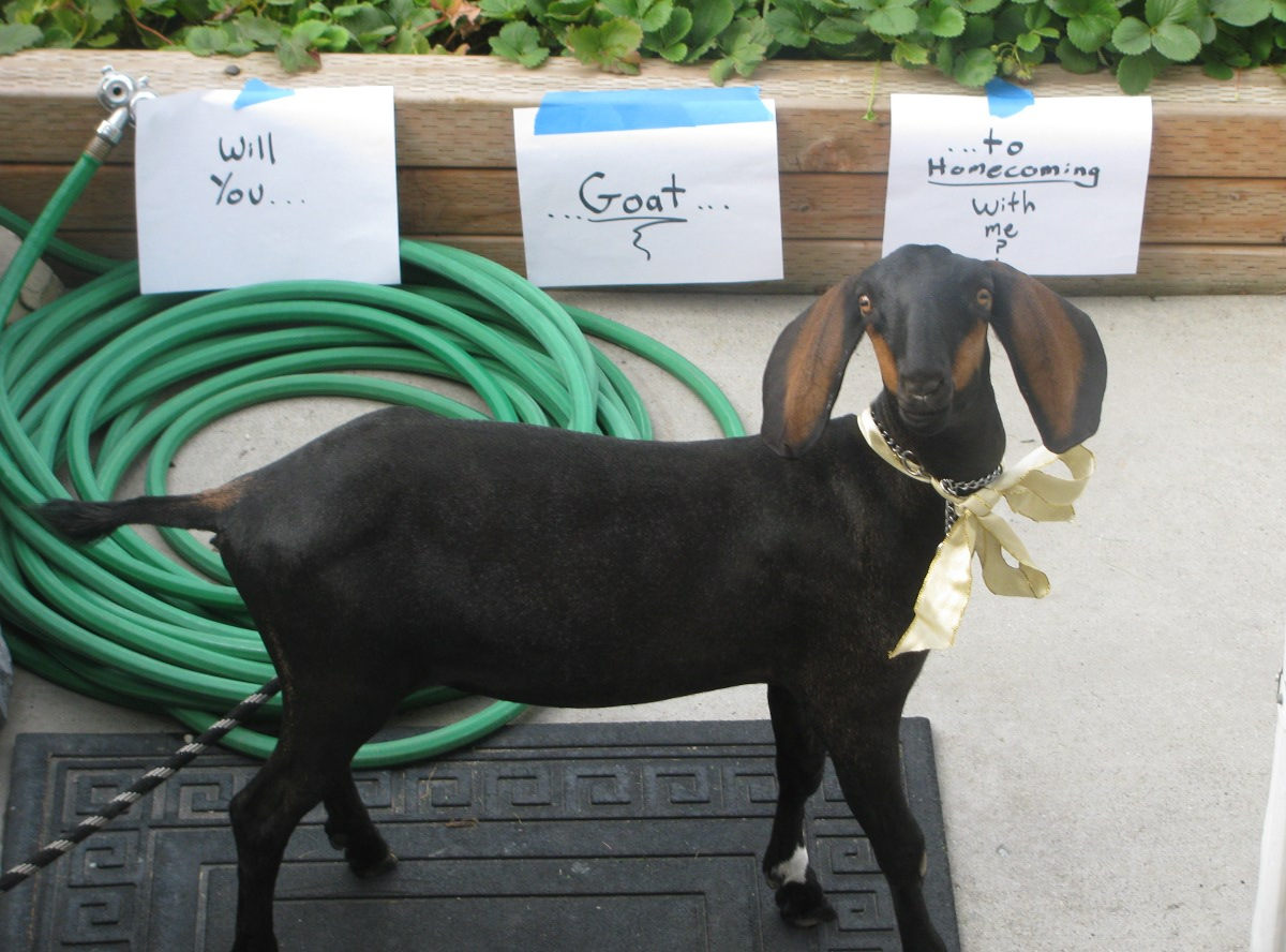 Homecoming asking ideas will you goat to homecoming