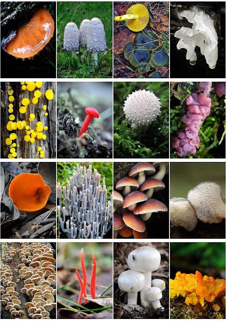 Fungimap's Blog: Fungi...