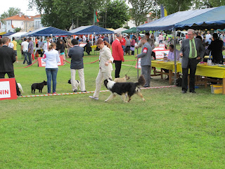 australian shepherd in Sintra 2013 dog show