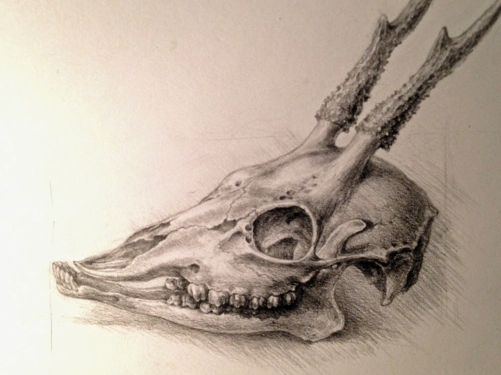 Deer Head Anatomy Diagram Deer Vitals Diagram - Wire Diagrams