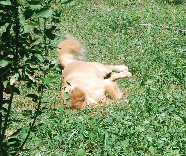 My dog Opie