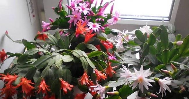Mali trik: da vaše biljke cvetaju dugo i bogato. « Recept za sve