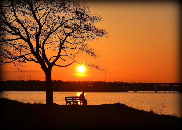 salem willows, sunset, contemplation, bench, tree
