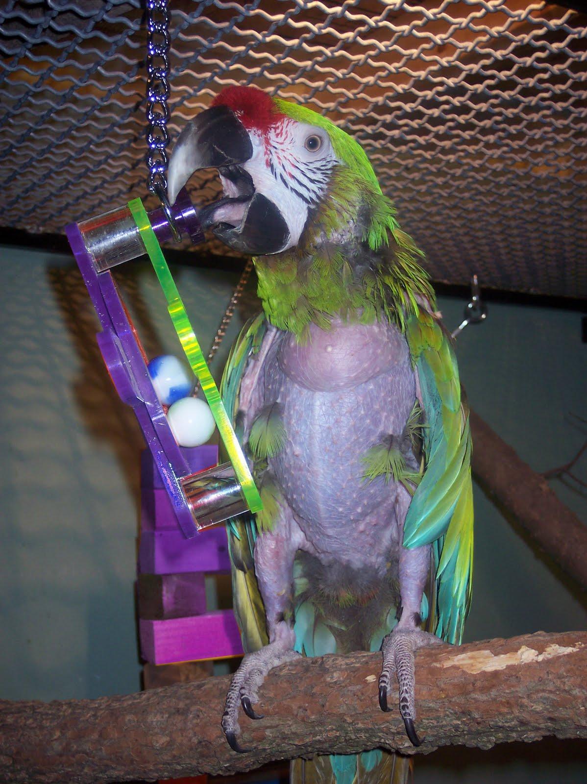 Twenty Years of Progress in Pet Bird Nutrition (JAVMA 1998 ... Ruffled Feathers Sanctuary