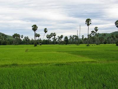 paysage-route-battambang-phnom-penh