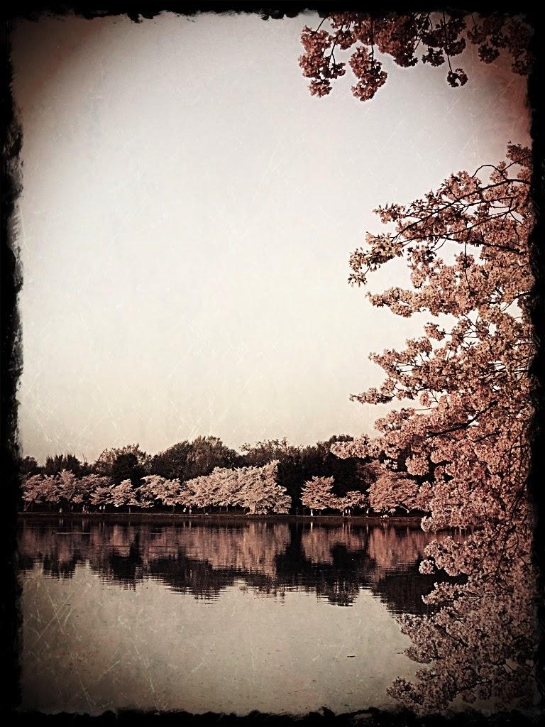 Cherry Blossom Breakfast Roll