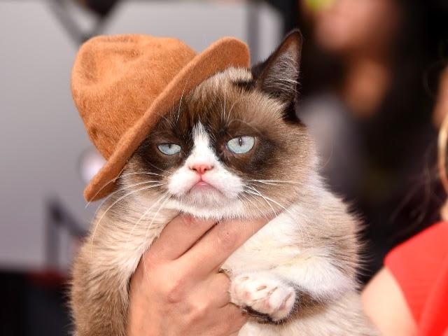 dwarfism syndrome, sakit kucing,kucing sakit nak buat macamana