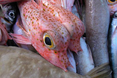 Weird Fish Seen On www.coolpicturegallery.us