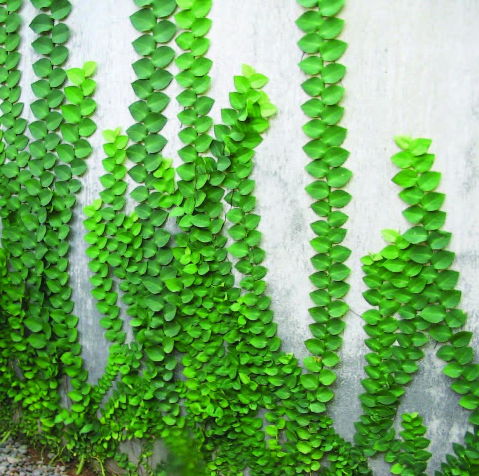www.hijaudansehat.blogspot.com