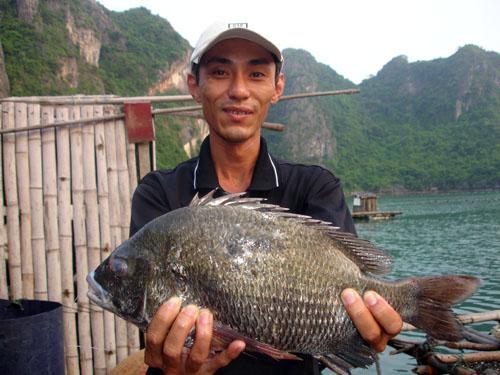 Những bí quyết câu cá tráp của dân câu