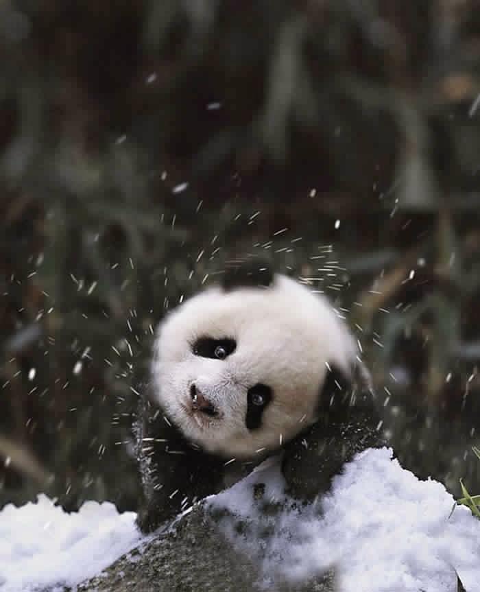 حيوانات في الثلوج