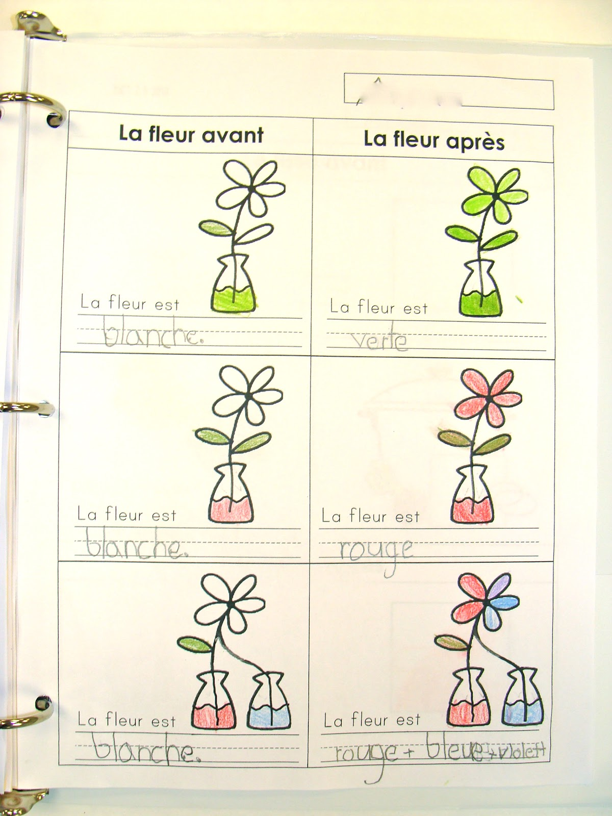 Madame belle feuille les couleurs for How to dye flowers using food coloring