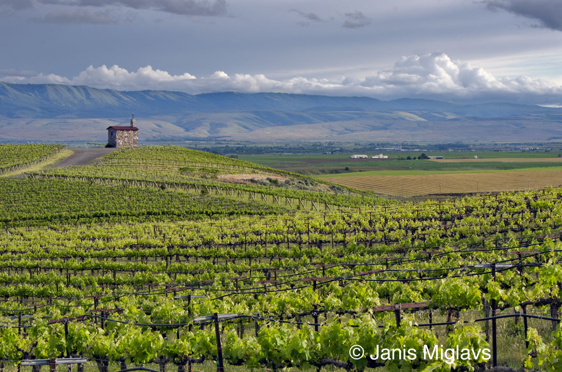 Are we there yet photographer janis miglavs wine for Landscaping rocks yakima