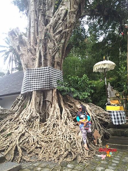 Anchor what versi Bali :)