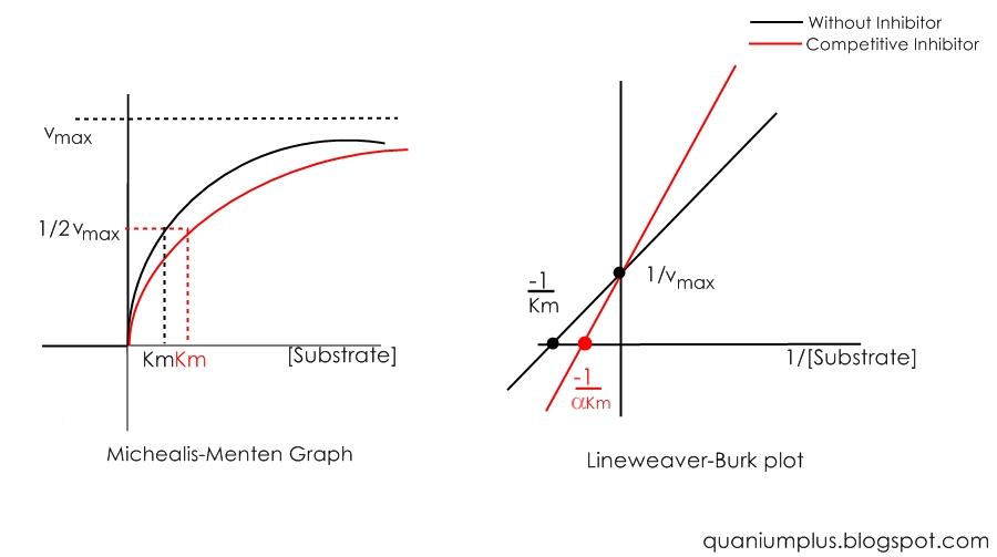 how to draw a michaelis menten graph