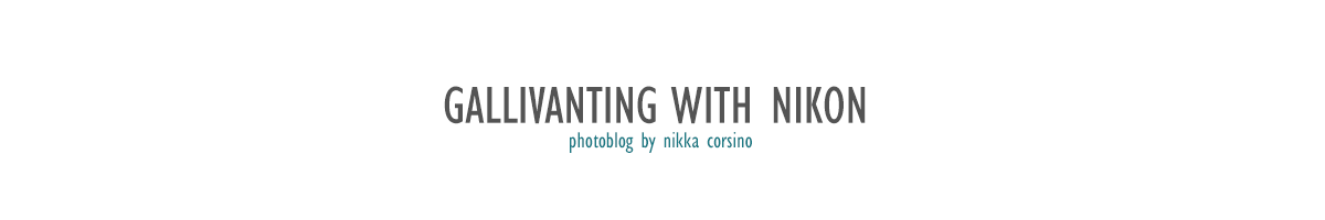 Gallivanting with Nikon
