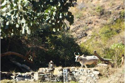 Rajasthan village photos