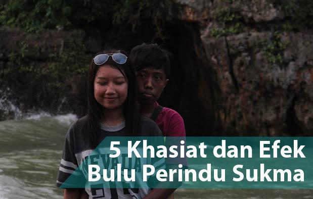 Kegunaan, Khasiat, dan Efek Bulu Perindu Sukma Kalimantan