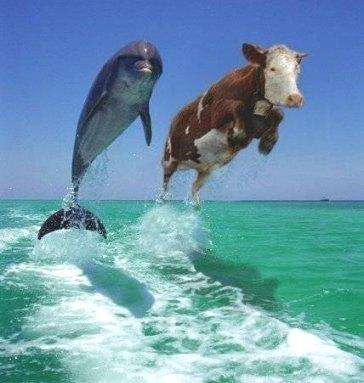 funny-cow-4.jpg