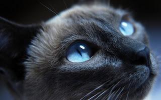 Wallpaper pisica 1