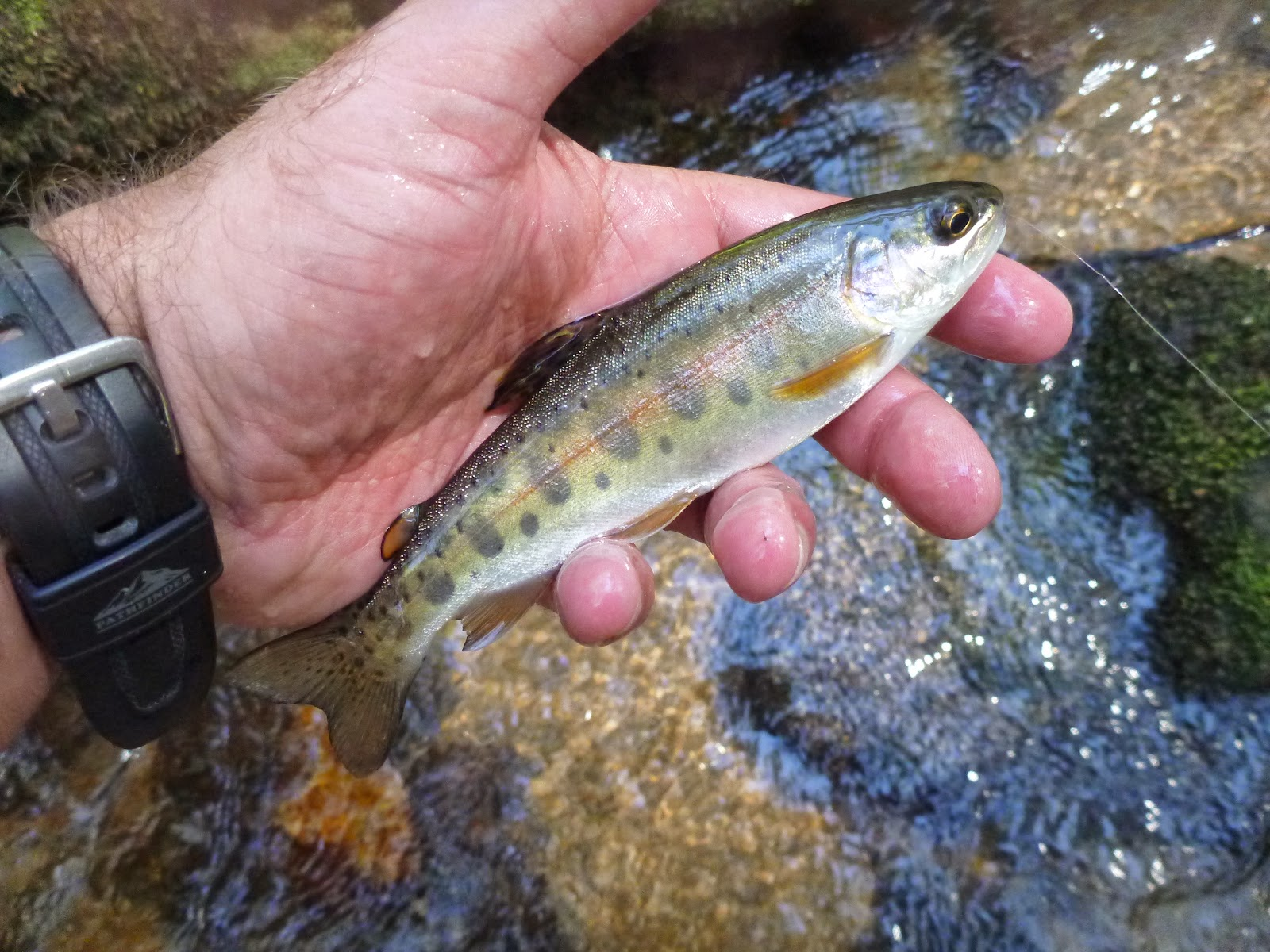 Troutrageous fly fishing tenkara blog for Fly fishing north georgia