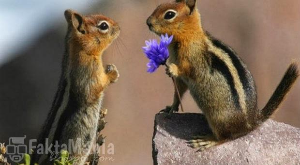 8 Hewan yang Romantis Dalam Memikat Pasangannya