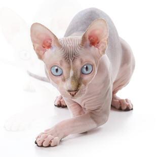 france chat sans inscription Caluire-et-Cuire