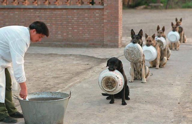 Anjing Mengantri di Tempat Pelatihan Anjing