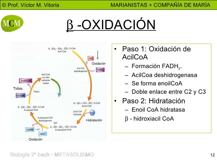 proceso anabolico respiracion celular