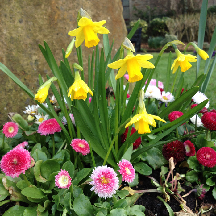 Spring Flowers - so glad to be welcoming in March and the beginnings of Spring #spring #flowers