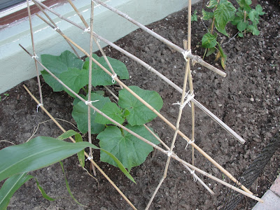 cucumber trellis