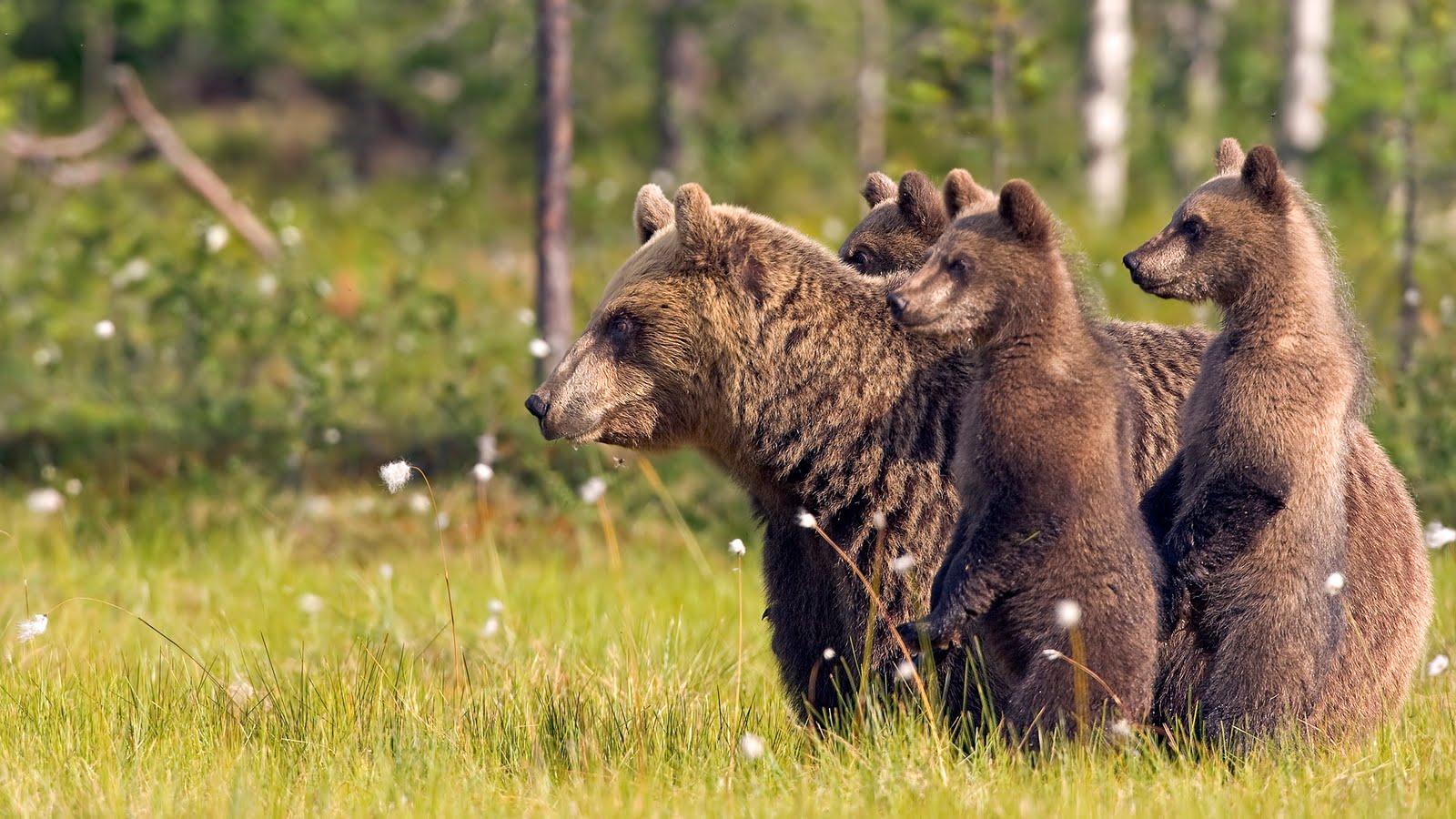 Free Image Bank: Hermosas criaturas del reino animal