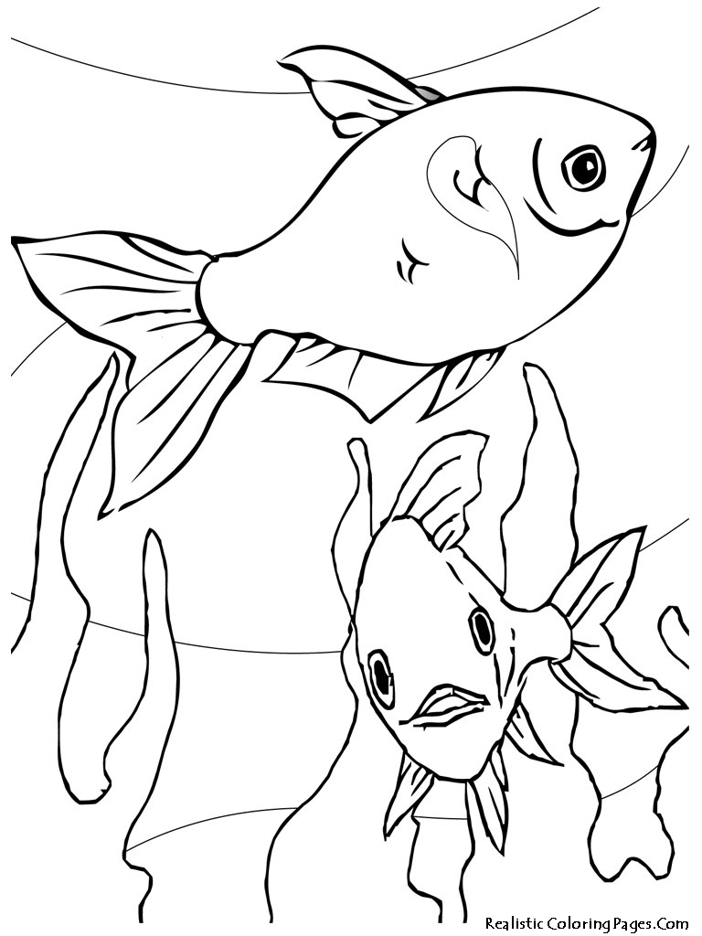 aquarium fish printable coloring sheet realistic coloring pages