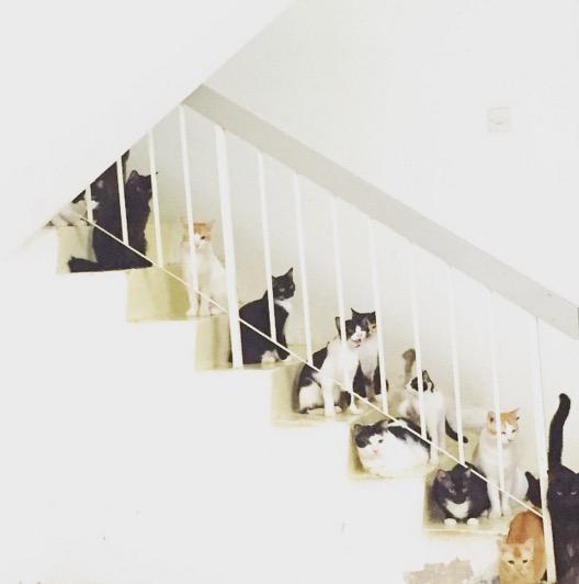 Wanita Tinggal Sebumbung Dengan 48 Ekor Kucing