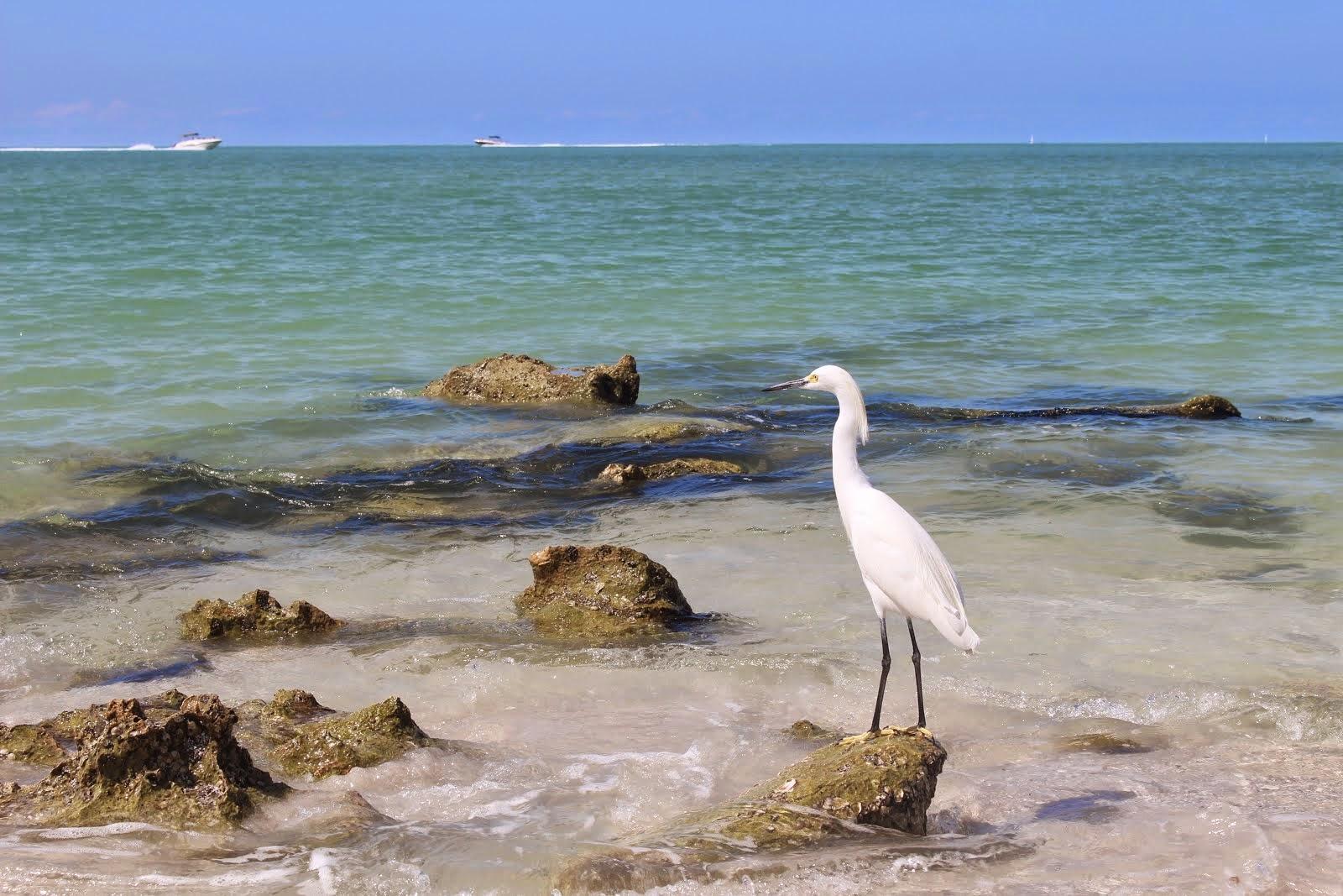 En admiration devant la beauté du paysage, Naples, FL