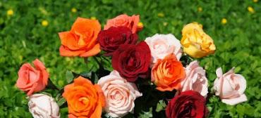 #10 Wonderful Flowers Rose Wallpaper
