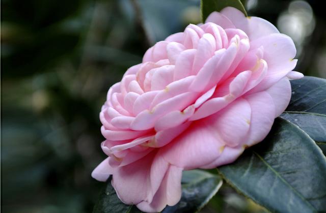أجمل صور الورود hd , موقع جزيرة خيال