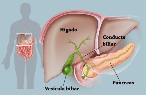 Vesícula biliar