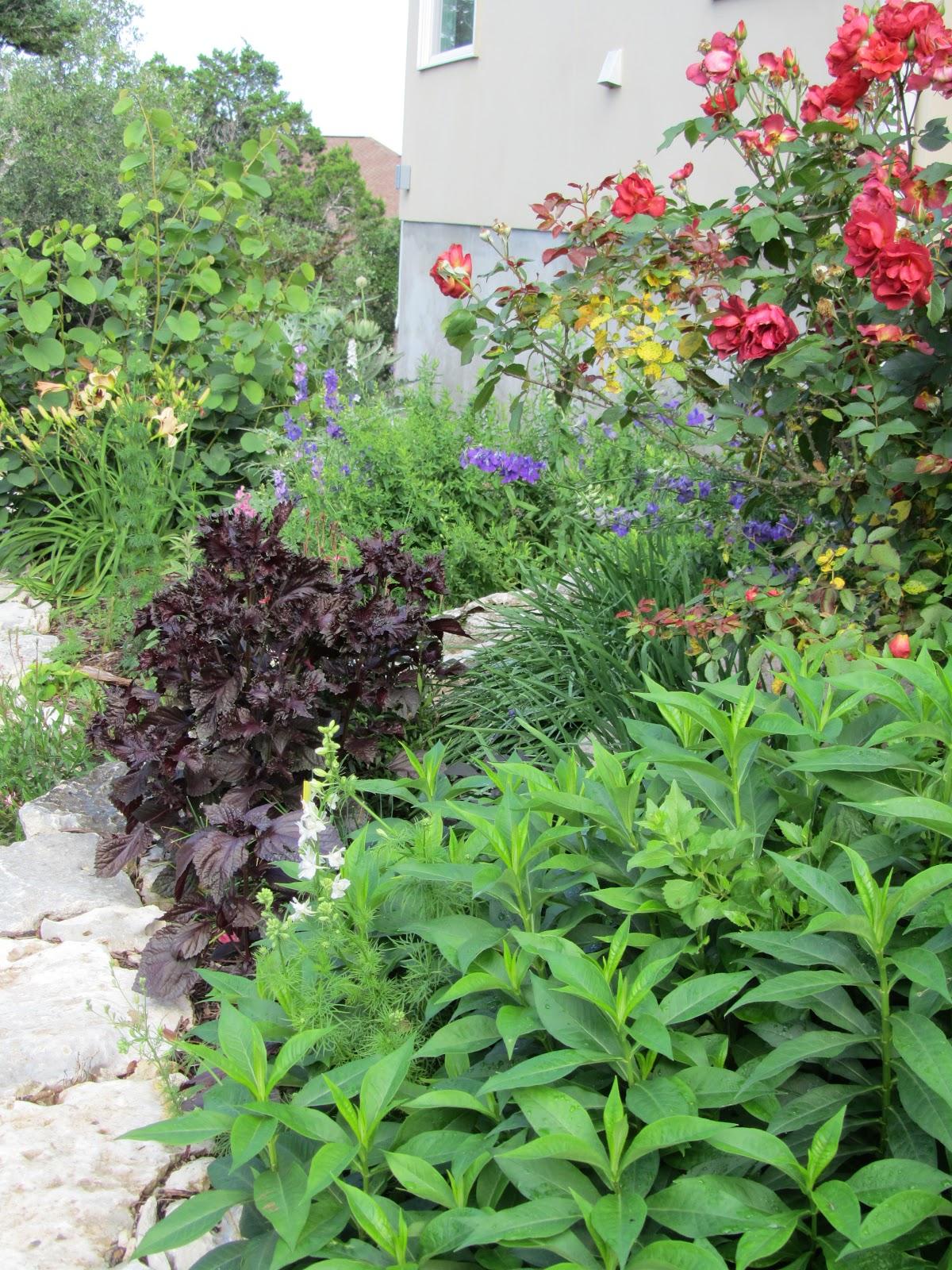 Hastypearl: May Garden In South Central Texas on hosta and daylily garden, hosta and caladium garden, hosta garden plans blueprints, hosta and hydrangea garden,