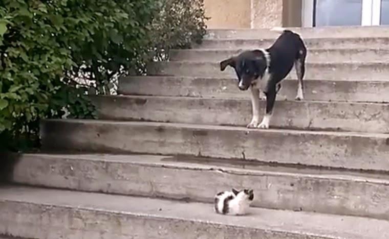 gato asusta al perro de un maullido