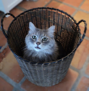 Augustus, Basket Case