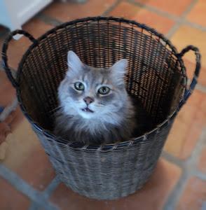 Augustus, Basket Case