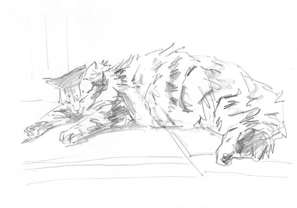 карандашный котик