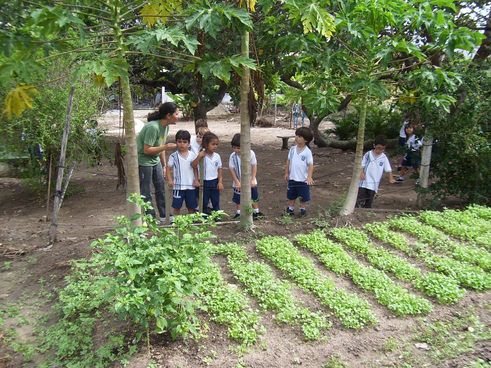 jardim de horta e pomarBlog da Turminha EVL Horta, Pomar e Jardim