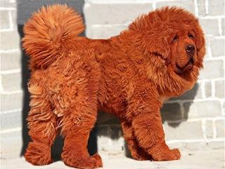 cachorros diferentes