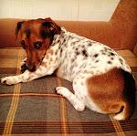 моя маленькая собачонка