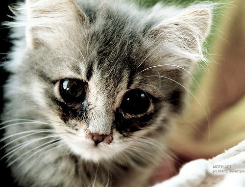 Cat in the world: Pictures of sad kitten