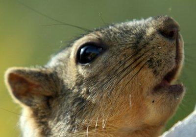 Squirrel 68